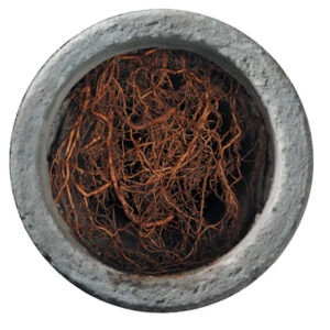 Sewer Line Repair Services in San Mateo